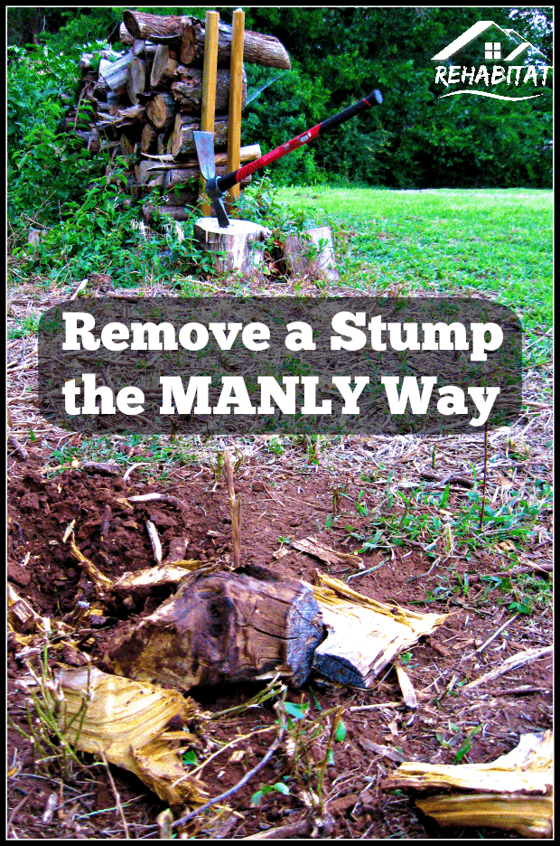 Removing A Stump the Manly Way with a cutter mattock | rehabitathome.com