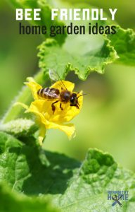 How to get more bees to your garden to grow larger, healthier plants #gardening