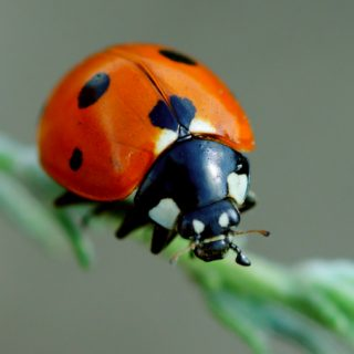 How to rid your garden of bad insects by attracting ladybugs