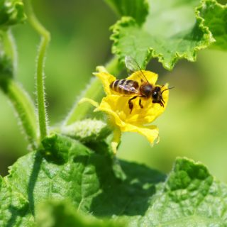 Do your plants need pollinators? How to get more garden bees.