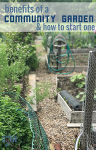 The benefits of joining a community garden or starting on in your area... even i fyou have a home garden space.
