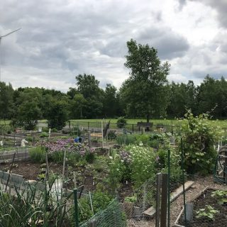 What are the benefits of joining a local community garden?